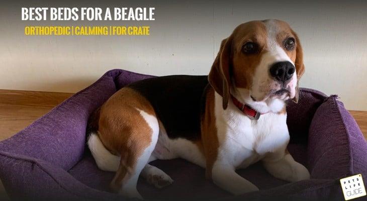 best dog beds for beagle