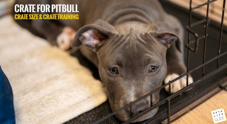 best size crate for pitbull