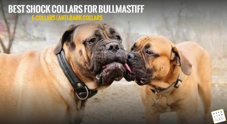 Best Shock Collars for Bullmastiff