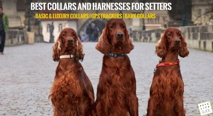 best collars and harnesses for setter
