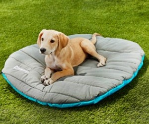 Chuckit! Travel Dog Bed review