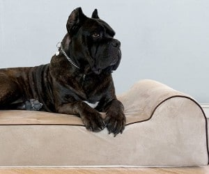 Bully Beds Orthopedic Dog Bed review