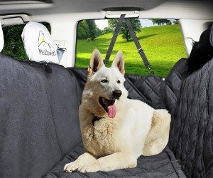 Meadowlark Dog Seat Cover with Unique Design review