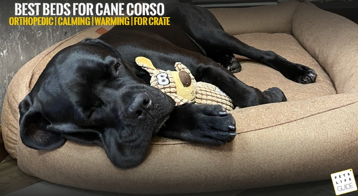 Best Pet Beds for Cane Corso