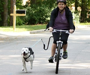 Springer Hands Free Dog Leash for Bike review