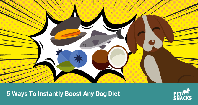 preview-full-5-ways-to-instantly-boost-any-dog-diet