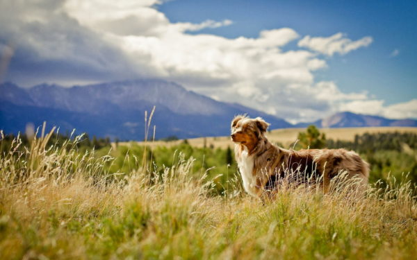 dogs-field-nature-wallpaper-1