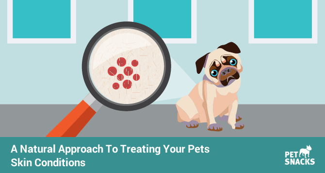 preview-full-A Natural Approach To Treating Your Pets Skin Conditions