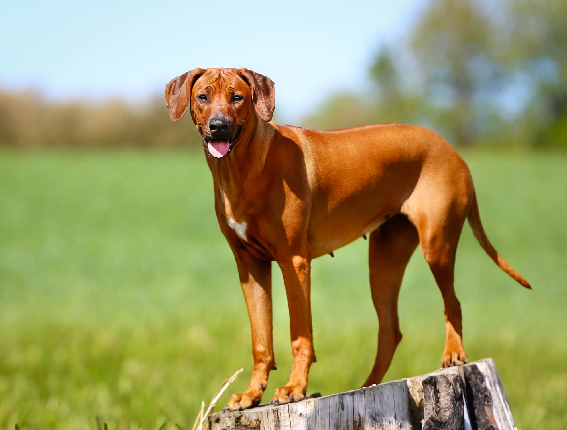 All You Should Know About Non-Shedding Dog Breed   Pets ...