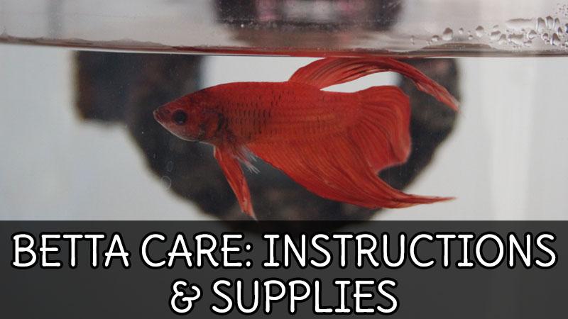 BETTA CARE: Instructions & Supplies