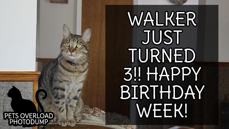 Walker Just Turned 3!! Happy Birthday Week!
