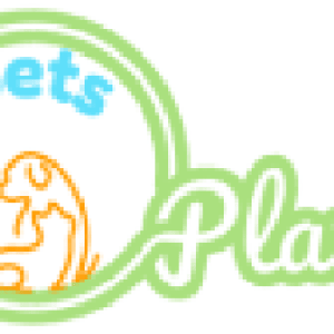 Blue-and-Gold-Macaw - Pets Plaza
