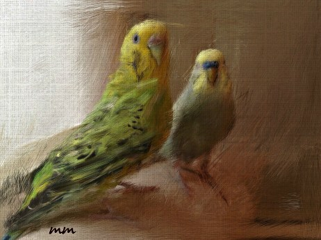 Portraits of two lovebirds