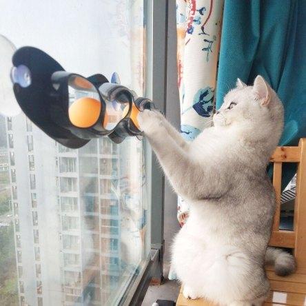 Jouet interactif pour chat avec ventouses à balles