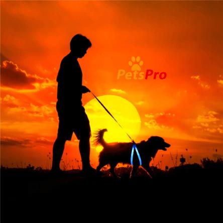 Harnais lumineux pour chien