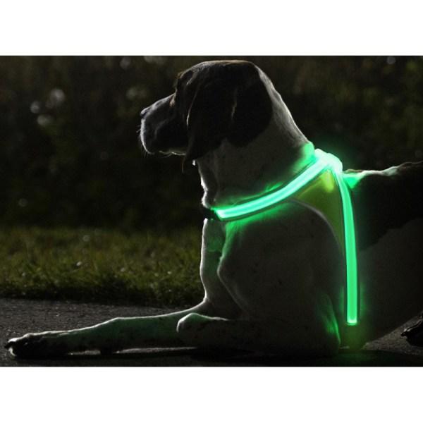 harnais lumineux chien
