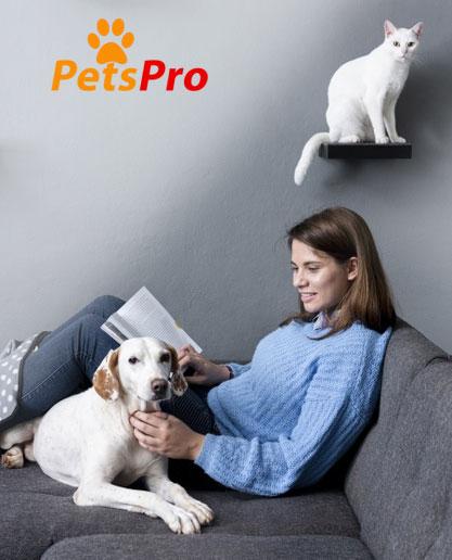 animalerie en ligne chat et chien