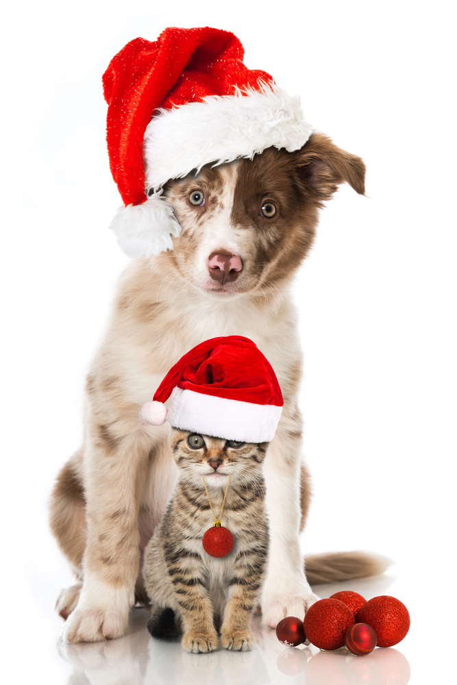 Cute Baby Wallpapers Online Shopping Top 4 Favourite Christmas Pet Gifts Petstayadvisor