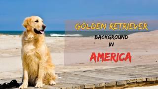Golden Retriever Background America