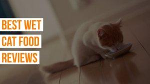 Best Wet Cat Food Reviews