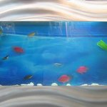 Aussie-Aquariums-Wall-Mounted-Aquarium-Standard-0-0