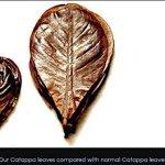 100-Pcs-Catappa-Ketapang-Indian-Almond-Leaf-for-Fish-Tank-0-0