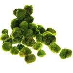 20pcs-Giant-Marimo-Moss-Balls-0612-Cladophora-aegagrophila-Live-Plant-Freshwater-Aquarium-0-0
