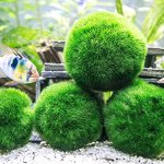 Aquatic-Arts-3-Betta-Fish-Balls-Live-Marimo-Aquarium-Plants-for-Fish-Tanks-Natural-Toy-Accessories-for-Betta-Fish-Green-X-Large-0-2