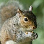 Audubon-Park-12223-Cracked-Corn-Wild-Bird-and-Critter-Food-5-Pounds-0-2