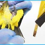 Bird-Sexing-DNA-Sample-Collection-Kit-Gender-Reveal-Test-for-Parrots-Lovebirds-Cockatoos-African-Grey-Cockatiels-Parakeets-300-Psittacines-Avian-Sexing-DNA-Testing-0-1