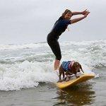 HAOCOO-Dog-Life-Jacket-Vest-Saver-Safety-Swimsuit-Preserver-with-Reflective-StripesAdjustable-Belt-for-Dog-0-0