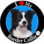 I-Love-My-Border-Collie-Car-Magnet-With-Realistic-Looking-Border-Collie-Photograph-In-The-Center-Covered-In-UV-Gloss-For-Weather-and-Fading-Protection-Circle-Shaped-Magnet-Measures-525-Inches-Diameter-0