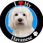 I-Love-My-Havanese-Car-Magnet-With-Realistic-Looking-Havanese-Photograph-In-The-Center-Covered-In-UV-Gloss-For-Weather-and-Fading-Protection-Circle-Shaped-Magnet-Measures-525-Inches-Diameter-0