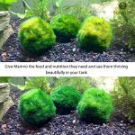 Luffy-Marimo-Fertilizer-Marimo-Food-boosts-Growth-Imparts-and-enhances-Color-Regular-Dosage-Results-in-fluffier-marimos-0-2