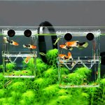 MundoPet-Aquarium-Breeding-Hatchery-Incubator-Isolation-Box-Tank-for-Fish-Breeder-0