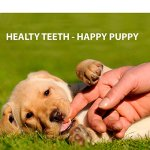 Puppy-Teething-Toys-Puppy-Teething-Ring-Bones-Puppy-Treats-Chicken-Natural-Dental-Chews-Best-For-Puppy-Chewing-Puppy-Teething-Set-With-Squeaky-Ball-and-3-Teething-Rings-Puppy-Chew-Bundle-0-1