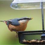 Wagners-62037-Supreme-Plus-Wild-Bird-Food-10-Pound-Bag-0-2