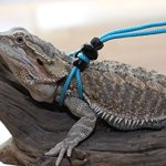 Adjustable-Reptile-Leash-Harness-Great-for-Reptiles-or-Small-Pets-100-Adjustable-One-Size-Fits-Most-0-0