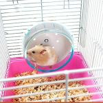 Best-Quality-Cat-Toys-Plastic-Hamster-Wheel-Mouse-Rat-Exercise-Silent-Running-Spinner-Wheel-Ball-Toys-for-Hamster-Pet-Supplies-Hamster-Toy-by-VietFA-1-PCs-0-1
