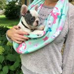Critter-Cuddler-Small-Animal-Carrier-and-Bonding-Pouch-Anti-Anxiety-Interactive-Play-Exercise-Ring-Therapeutic-for-Pet-Handler-Small-Dog-Cat-Hedgehog-Puppy-Travel-Sling-Made-in-USA-0-1