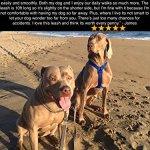 Dog-Company-Retractable-Dog-Leash-1-Premium-Dog-Leash-Superior-Engineering-Walking-or-Training-DogsCats-0-2
