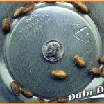 Dubia-Roaches-Small-12-22-Grams-Average-Count-200-0