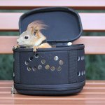 LINE-S-Portable-Small-Animal-Carrier-Cage-for-Hamster-Dwarf-Squirrel-Mice-Ferrets-Chinchilla-HedgehogEVA-BreathableComfort-0