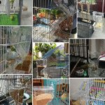 Mrli-Pet-No-Mess-Bird-Feeder-Parrot-Integrated-Automatic-Feeder-with-Perch-Cage-Accessories-for-Budgerigar-Canary-Cockatiel-Finch-Parakeet-Seed-Food-Container-0-1