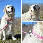 Southern-Dawg-Premium-Dog-Leash-Seersucker-with-Comfort-Grip-Handle-Made-in-The-USA-by-Yellow-Dog-Design-0-0
