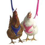 Valhoma-Chicken-Fair-Walking-Padded-Harness-Bantham-Pullet-Hen-Rooster-Duck-XS-Purple-0