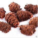 qin-chenchen-10-Pieces-Tasty-Toasty-Pine-Cone-Squirrel-Rabbit-Chew-Treats-Toys-0-0