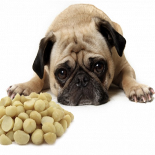 You should never feed your dog macadamia nuts.