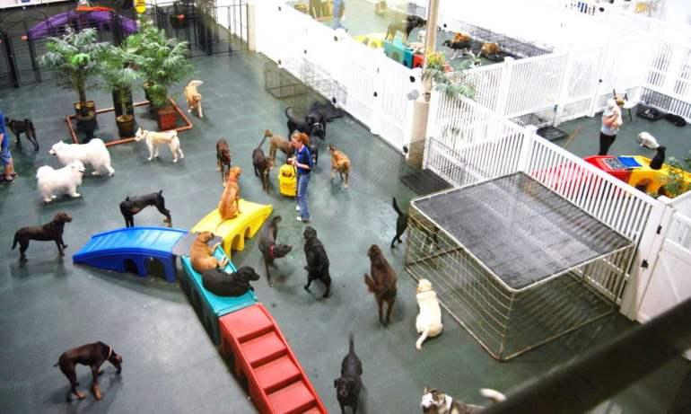 Dog Day Care Near Me