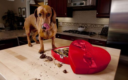 Dog Treats That Are Bad For Dogs